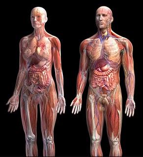 http://4.bp.blogspot.com/_5ynVmWVkrgQ/S3PPYdxJBrI/AAAAAAAAAGE/gHkDuyrE2I0/s400/Jam+Piket+organ+tubuh+manusia.jpg